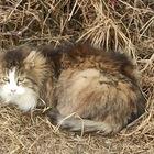 Старенький котик ищет дом