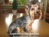 Зооуслуги для животных, стрижка собак и кошек на дому Профессиональная стрижка с