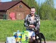 Санкт-Петербург: Предлагаю услуги хендлера Предлагаю услуги хендлера в Санкт-Петербурге. Подготовка вашей собаки к выставкам, показ собаки в ринге, обучение владельца