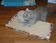 Акция, Когтеточки-лежанки для кошек в С-Петербурге Внимание! Акция 2+1! Покупает