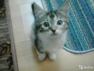 Милых котят в добрые руки Отдам котят (два рыженьких мальчика и трехцветная дево