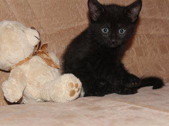 Домашняя кошка фото в Саранске