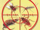 Foto в Прочее,  разное Разное 1 Уничтожение всех видов насекомых (блохи, в Саратове 350