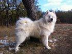 Фотография в   Потерялась собака на 7 дачной в ленинском в Саратове 0