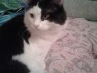 Скачать фото Потерянные Пропали 2 кота на ул, Заводская (ЖК Янтарный) 37934699 в Саратове