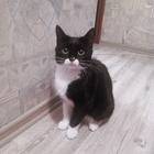 Ищем кота для вязки с кошечкой