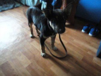 Смотреть фотографию Продажа собак, щенков Отдам в добрые руки щенка, 34863504 в Саратове