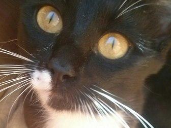 Смотреть фото Отдам даром - приму в дар Кошка мышелов в добрые руки 37294239 в Саратове