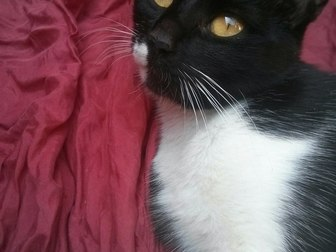 Скачать foto Отдам даром - приму в дар Кошка мышелов в добрые руки 37294239 в Саратове