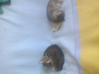 Увидеть изображение Отдам даром отдам котенка от домашней кошки 37614656 в Саратове