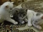 Фото в Отдам даром - Приму в дар Отдам даром Отдаем в добрые руки котят от белоснежной в Сергаче 0