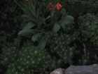 Просмотреть фото Дома Продам дом в г, Шахты в районе Неждановка 65180038 в Шахты