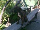 Фотография в Собаки и щенки Продажа собак, щенков Нашли брошенных щенков, в безлюдной зоне, в Симферополь 0