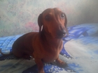 Фото в Собаки и щенки Продажа собак, щенков В связи со сложившейся ситуацией в семье в Смоленске 0