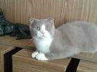 Уникальное фотографию Продажа кошек и котят котенок ищет хозяина 38829013 в Смоленске