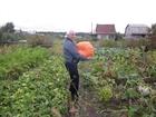 Просмотреть изображение Сады Сад № 4 СЦБК Земельный участок 54522510 в Соликамске