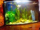 Фото в Рыбки (Аквариумистика) Купить аквариум продаю треугольный аквариум в Джанкое б\ в Старый Крым 3000