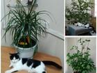 Смотреть изображение  Кошечка Фифа в добрые руки 68348902 в Ставрополе