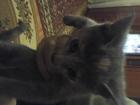 Просмотреть изображение Отдам даром - приму в дар отдам в хорошие руки веселых котят 71344944 в Ставрополе