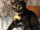 Красивые, умные котята ищут доброго хорошего хозяина