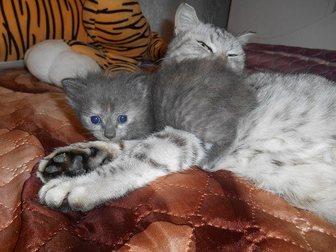 Увидеть foto Отдам даром Отдам котят в добрые руки 32733377 в Стерлитамаке