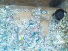 Изображение в Хобби и увлечения Разное Песчанка (ручные мышки) с аквариумом из орг. в Сургуте 500