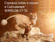 Стрижка кошек и собак в Сыктывкаре Парикмахерские услуги для собак и кошек (15-3