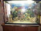 Фото в Рыбки (Аквариумистика) Купить аквариум Продам аквариум б/у, 140 литров с тумбой. в Тамбове 6000