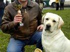 Фотография в Собаки и щенки Вязка собак Ищу невесту!   Молодой, титулованный кобель в Тюмени 0