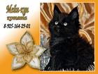 Фото в   Открыт резерв на котят из питомника.   На в Тюмени 0