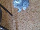 Скачать бесплатно foto Отдам даром котенок, нашла в подъезде срочно 34581660 в Тюмени