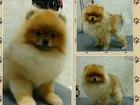Увидеть фотографию Услуги для животных Стрижка собак 38306544 в Тюмени