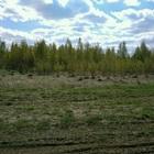 Продам земельный участок 12 сот, , ЛПХ, д, Московка, Велижанский тракт