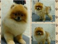 Стрижка собак Стрижка собак и кошек всех пород в Тюмени  -стрижка собак (породна