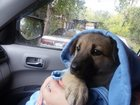 Фото в Собаки и щенки Продажа собак, щенков очень милый пёсик ищет хороших добрых хозяев. в Томске 0