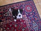 Фото в Собаки и щенки Продажа собак, щенков Отдам в заботливые руки щеночка (девочка). в Томске 0