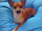 Скачать фото Вязка собак Ищем подругу 38773705 в Томске