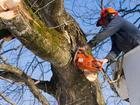 Свежее фото  Спил деревьев и кустов в Томске 39966591 в Томске