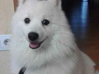 Уникальное фото Потери Потерялся пёс в кировсом районе 37739895 в Томске