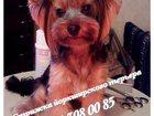 Фотография в Собаки и щенки Стрижка собак Предлагаю полный спектр груминг-услуг для в Туле 800