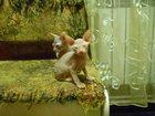 Фотки Донской сфинкс смотреть в Туле