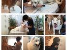 Уникальное фото Услуги для животных Стрижка (груминг) собак и кошек 40666574 в Туле