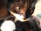 Просмотреть фото Отдам даром - приму в дар отдам в добрые руки бесплатно котенка-мальчика 3 месяца 70694800 в Тутаеве