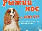 Фото в Собаки и щенки Стрижка собак Здравствуйте, уважаемые КЛИЕНТЫ! Будем рады в Твери 0