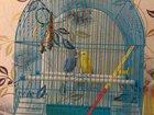 Просмотреть foto Птички Волнистые попугаи 34064709 в Твери