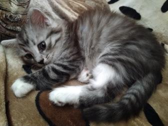 Смотреть фото Отдам даром - приму в дар отдам даром котенка-девочку, Тверь, 67369099 в Твери