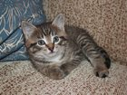 Фотография в Кошки и котята Продажа кошек и котят Два мальчика - 1, 5 мес. Самостоятельные в Уфе 0