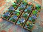 Смотреть фотографию Строительство домов Картины из живых растений 33427633 в Уфе