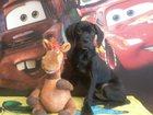 Фото в Собаки и щенки Продажа собак, щенков Породам девочку Кане Корсо. Возраст 4 мес. в Уфе 0