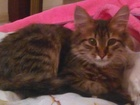 Изображение в Кошки и котята Продажа кошек и котят котенок ухоженный, чистоплотный, сам себя в Уфе 0